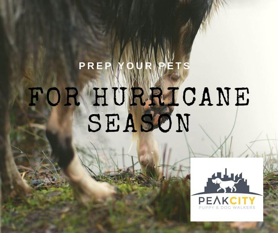 Pet Safety during Hurricane Season