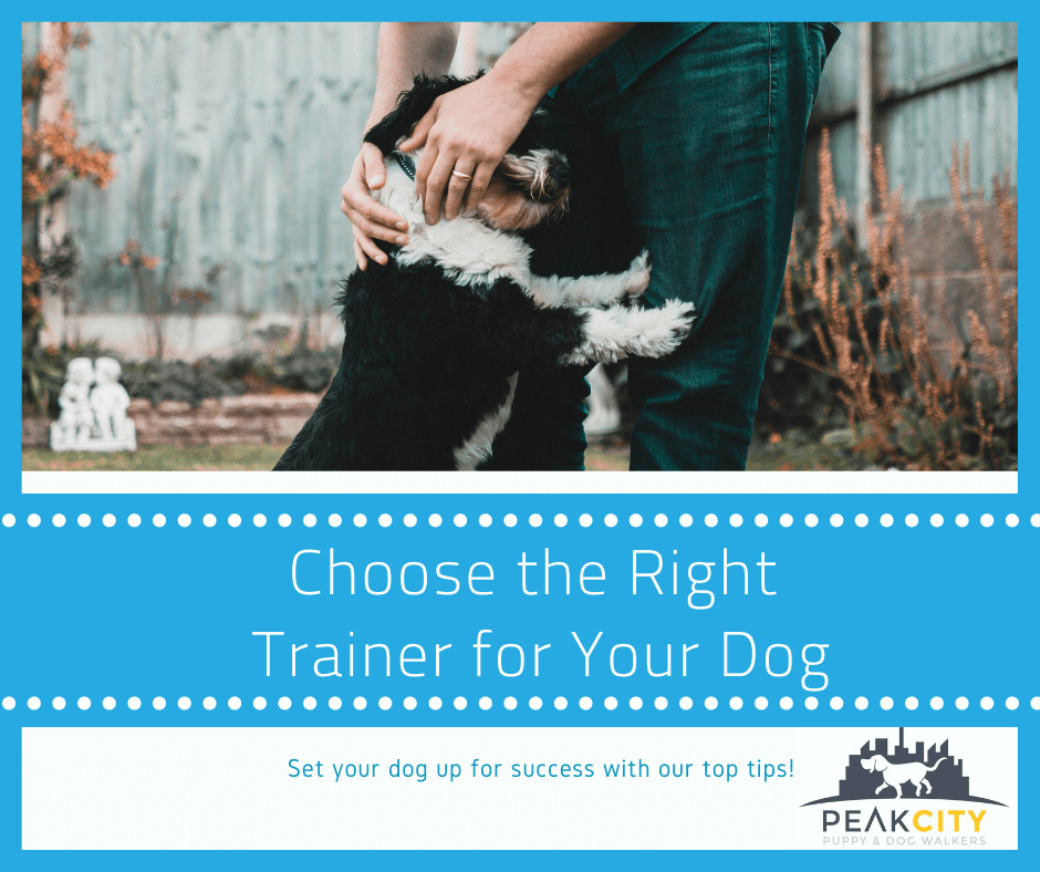 Choosing the best dog trainer