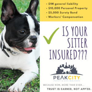 Insurance and Pet Sitters