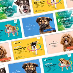 DNA for Dogs, Dog Blog